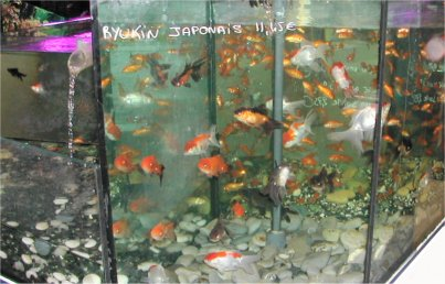 Vente de poissons for Vente de poisson rouge 75008